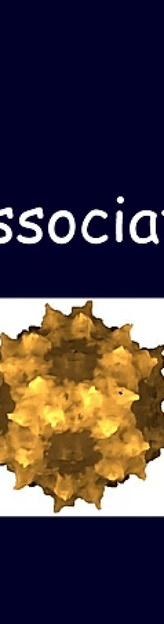 Adénovirus